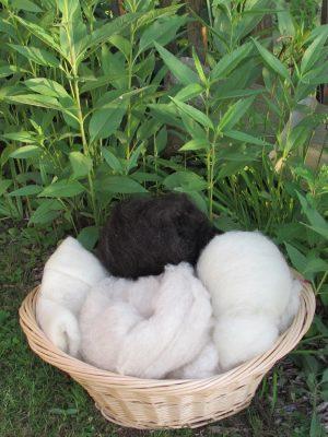 Schafwolle kardiert